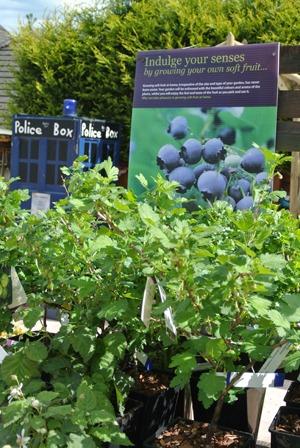 Kershaws Garden Centre Fruit