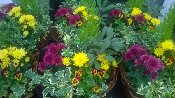 Autumn planter 3