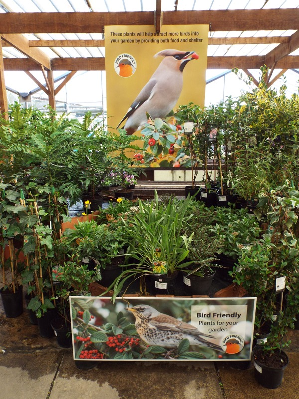 Bird friendly Plants at Kershaw's Garden Cnetre 2-2